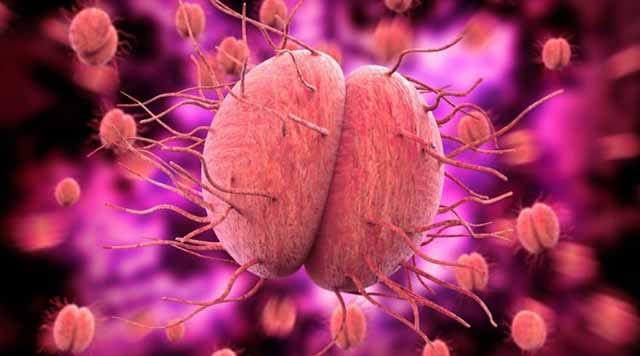 Virus neisseria gonorrhoeae